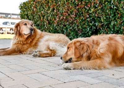 Resident Woodrose Winery Greeters